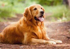 """""""Loyale Freundschaft"""": Nachdem der Hund seinen Freund verloren hat, verbringt er den ganzen Tag mit der Suchanzeige"""