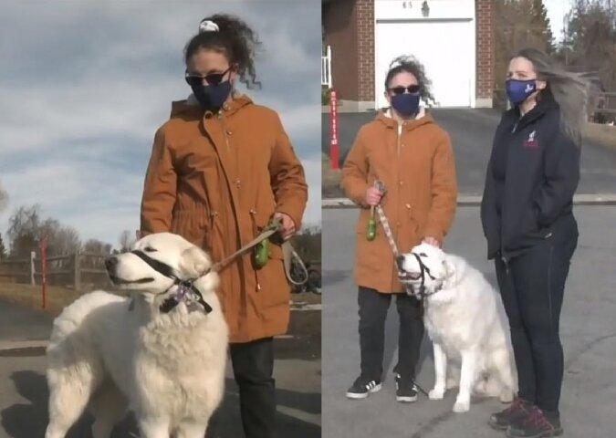 Rettungshund Clover. Quelle:dailymail.co.uk