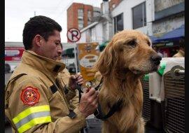 Jedes Jahr nimmt ein Feuerwehrmann gerettete Hunde nach Hause mit in Erinnerung an das Haustier, das er verloren hat