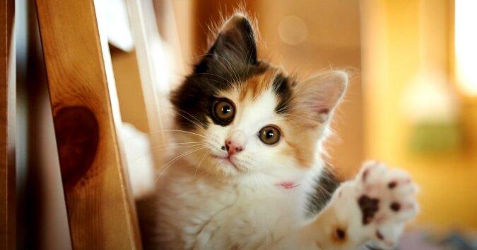 Katze. Quelle: Screenshot YouTube