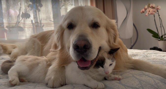 Hund und Kätzchen. Quelle: Screenshot YouTube