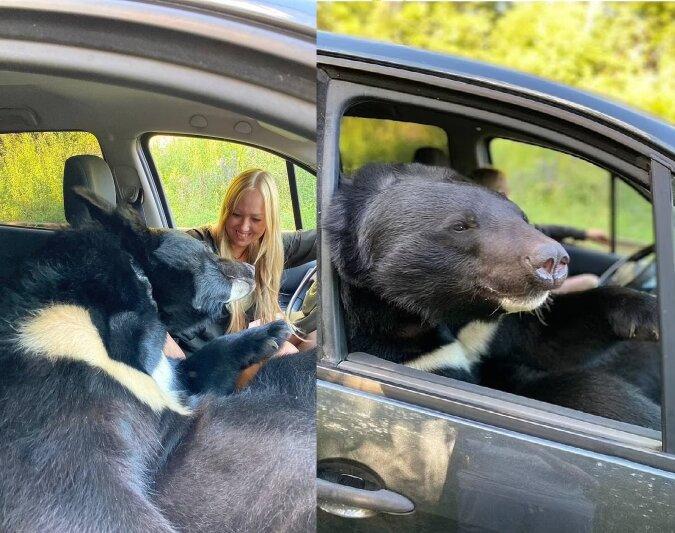 Der Bär. Quelle:dailymail.co.uk