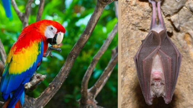 Ein Ara Papagei; ein Kurzohrfledermaus. Quelle: travelask