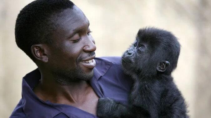 Ein Gorilla mit dem Mann. Quelle: goodhouse