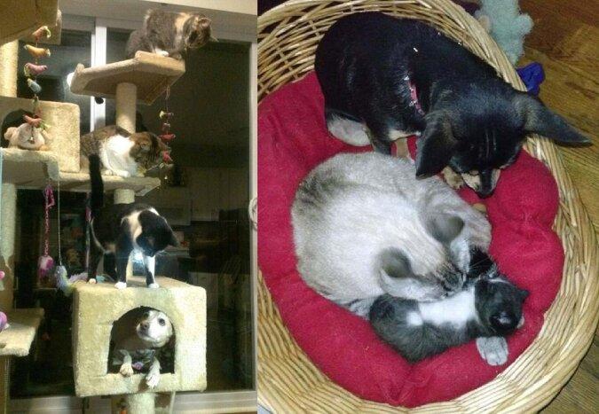 Katzen und Hunde. Quelle:dailymail.co.uk