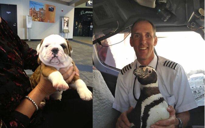 Tiere im Flugzeug. Quelle:dailymail.co.uk