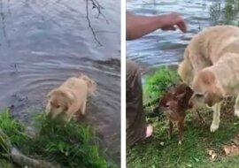 Hund und Rehbaby. Quelle: Screenshot YouTube