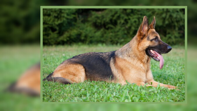 Ein Hund. Quelle: pinterest