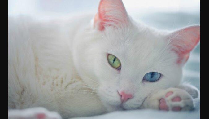 Ein Sportler rettete eine Katze mit unterschiedlichen Augen: man bot ihm zehn Tausend Euro für das Tier