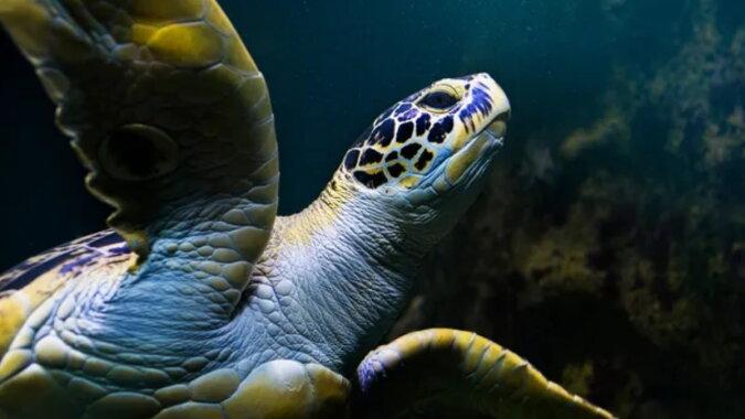 Eine Schildkröte. Quelle: goodhouse