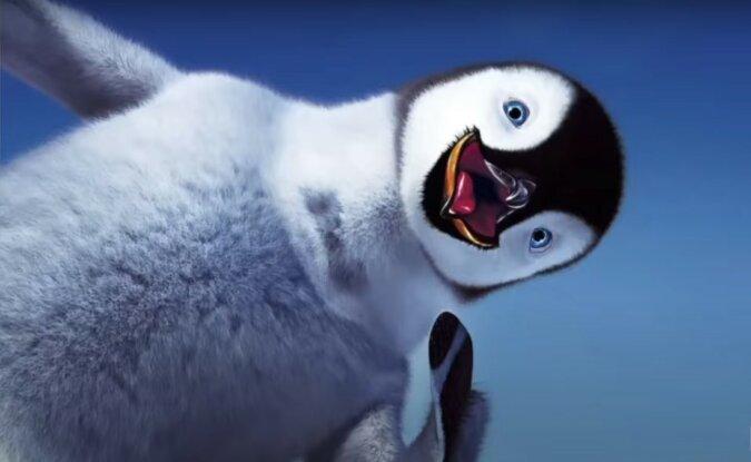 Pinguin. Quelle: Screenshot YouTube