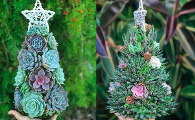 """""""Weihnachtsschönheit in Miniatur"""": Sukkulenten werden kreativ in festliche Minibäume verwandelt"""