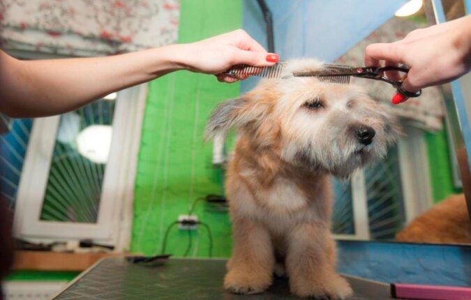 Die Frau gründete ein Tierheim und gab dem ausgesetzten Hund nicht nur die notwendige Behandlung, sondern auch das gute Aussehen zurück