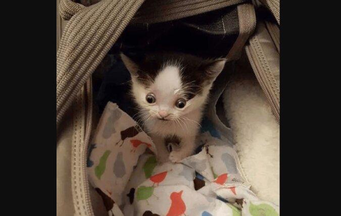 Kein Mensch wollte ein seltsam aussehendes Kätzchen aus dem Tierheim nehmen, doch dann geschah ein Wunder