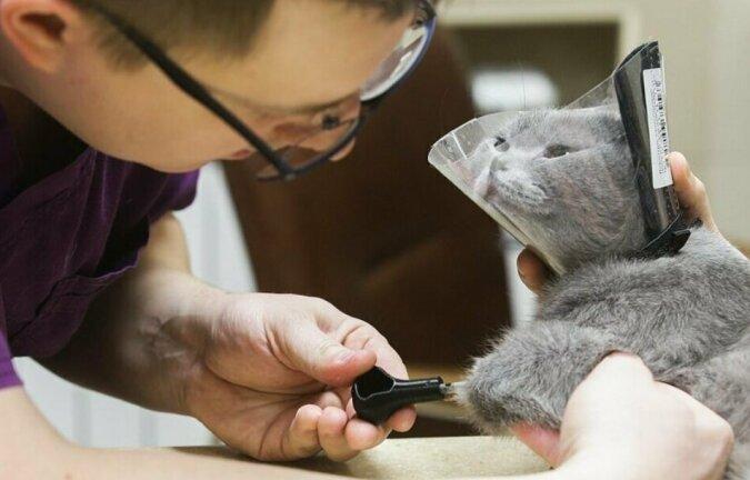 Die Katze, die sich in der Kälte die Pfoten erfroren hat, bekam dank den Prothesen eine zweite Chance