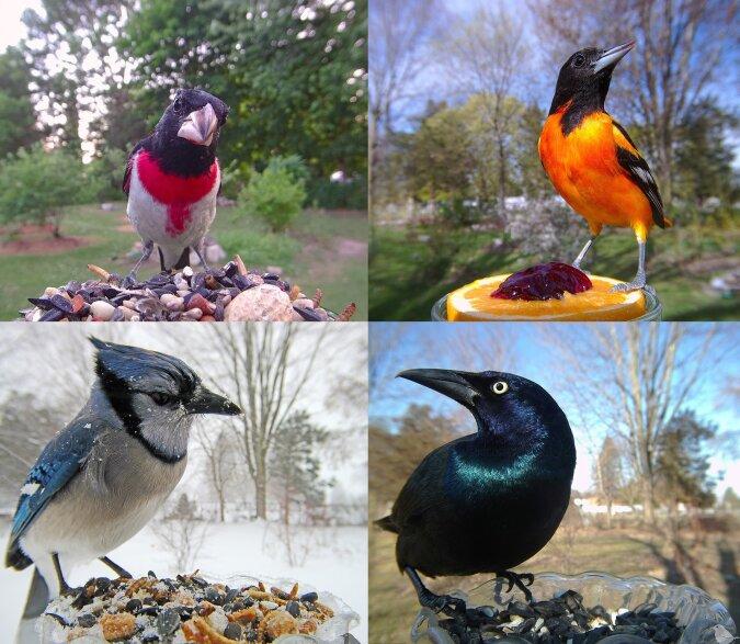 Sammlung von Vogelfotos. Quelle:dailymail.co.uk