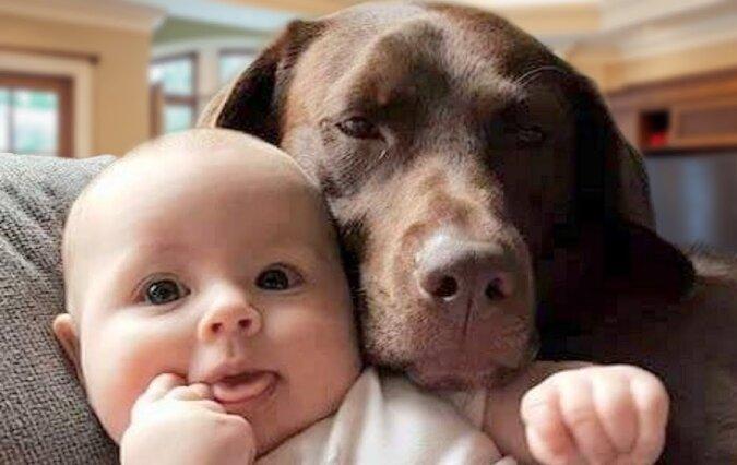 Das Baby und der Hund.Quelle:dailymail.co.uk