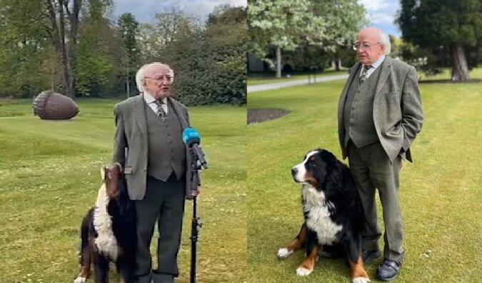 Der Welpe des irischen Präsidenten. Quelle:dailymail.co.uk