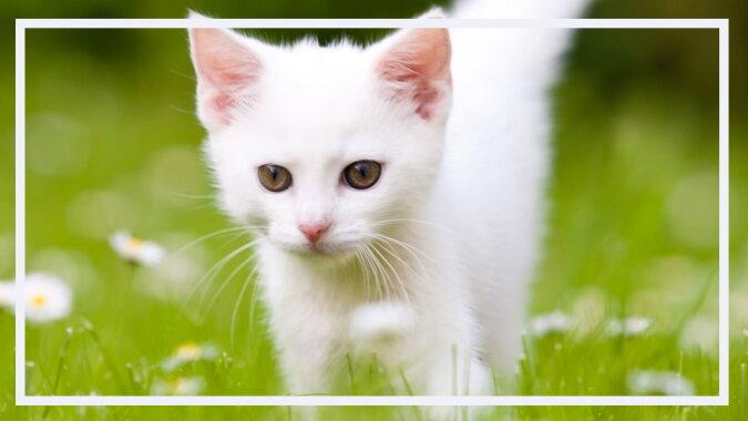 Ein weißes Kätzchen. Quelle: desktopbackground