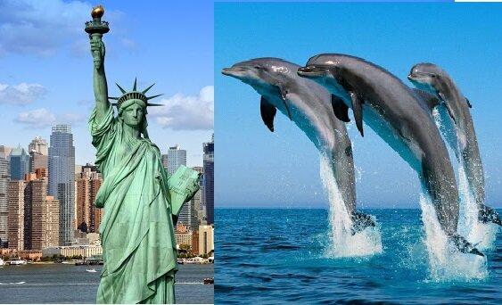 Delfine in New York. Quelle:dailymail.co.uk