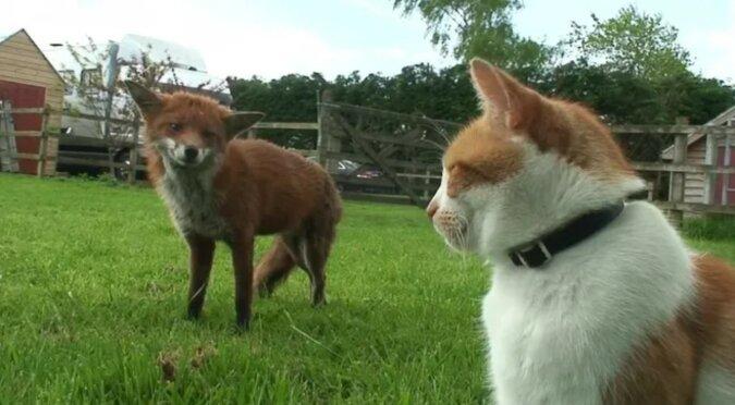Ein Fuchs und ein Kater. Quelle: goodhouse