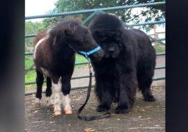 Pony und Hund. Quelle: Screenshot YouTube