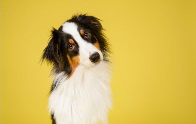 """""""Ich habe dir vertraut und du"""": Hund will seine Besitzerin nach einem Tierarztbesuch nicht mehr sehen"""