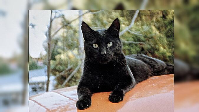 Eine Katze. Quelle:dailymail.co.uk