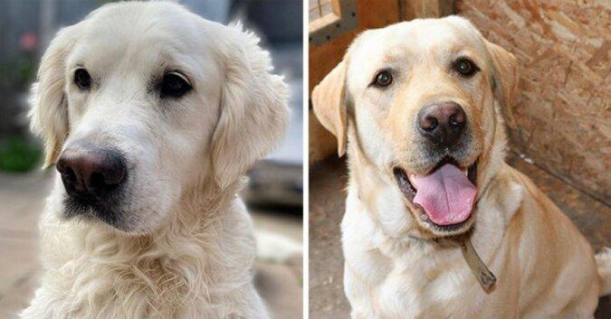 """""""Wie aus dem Gesicht geschnitten"""": Hunderassen, die Menschen oft durcheinanderbringen, und Erklärungen für ihre Unterschiede"""