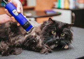 Ein Kater hatte viele Haare, aber Mitarbeiter des Tierheims verwandelten ihn in einen Schönling
