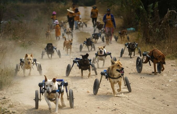 """""""Spiele der Unbesiegbaren"""": Eine Gruppe von Hunden hat bewiesen, dass es keine Hindernisse für ihre Lieblingsbeschäftigung gibt"""