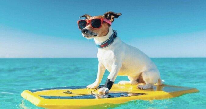 Ein Hund auf dem Wasser. Quelle: travelask