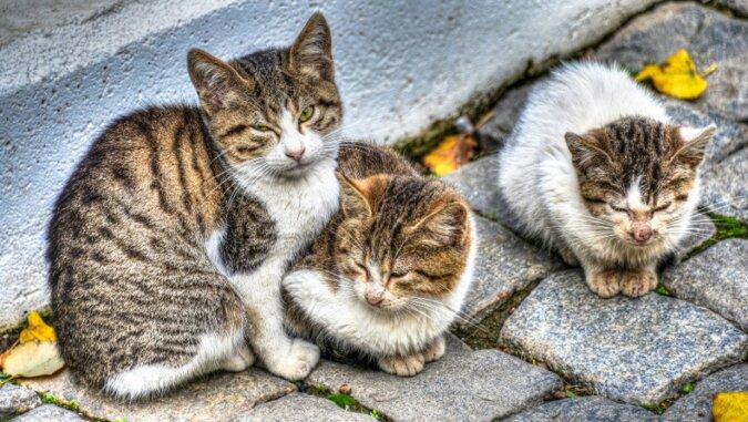 Die streunenden Katzen. Quelle: pinterest