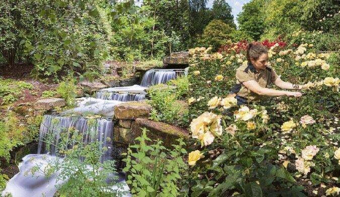 Gärten des Buckingham Palace. Quelle:dailymail.co.uk