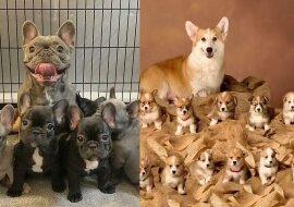 Hundeeltern mit ihren Welpen. Quelle:dailymail.co.uk