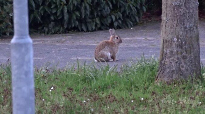 Ein Hase. Quelle: Screenshot YouTube