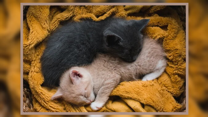 Zwei Kätzchen. Quelle: goodhouse