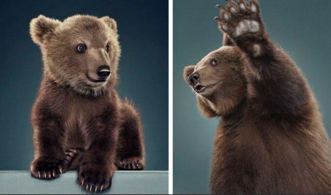 """""""Geborene Modells"""": Die Fotografin arrangiert originelle Fotosessions mit Bären"""