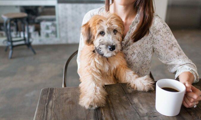 """""""Zwei Kaffees und einen Donut, bitte"""": Ein kluger Husky beschloss, selbst eine Bestellung in einem Straßencafé aufzugeben"""