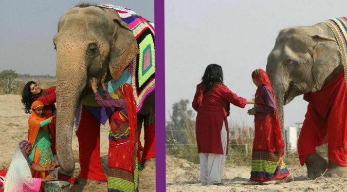 Bekleidete Elefanten. Quelle: travelask