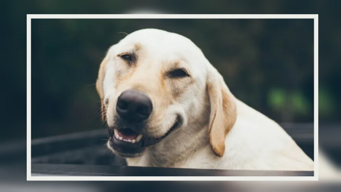Der freundliche Hund. Quelle: goodhouse