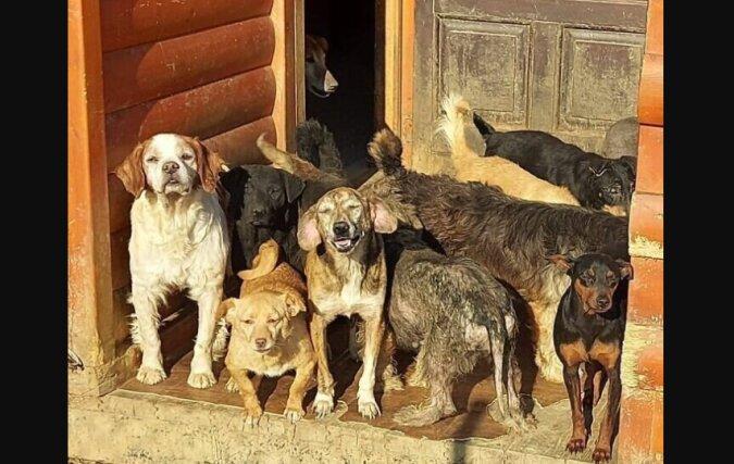 Hunde. Quelle: petpop.com
