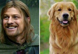 Ein Hund und der Schauspieler. Quelle: travelask