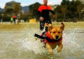 Ein Rettungshund. Quelle: facebook