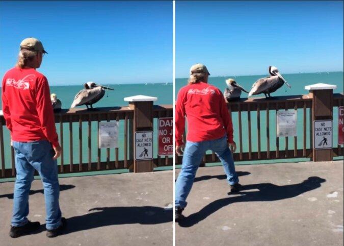 Rechtzeitige Hilfe: Fürsorgliche Menschen kamen nicht vorbei und halfen dem Pelikan, aus einer schwierigen Situation herauszukommen