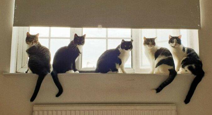 Fünf Katzen, die bei einem Mann zu Hause wohnen. Quelle: wi-fi.com