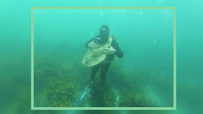 Der Taucher mit dem Hai. Quelle: goodhouse
