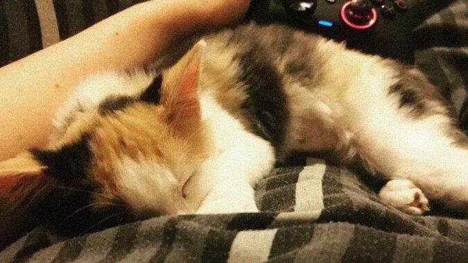 Besitzer wollten das Kätzchen loswerden, aber es überlebte und fand eine liebevolle Familie