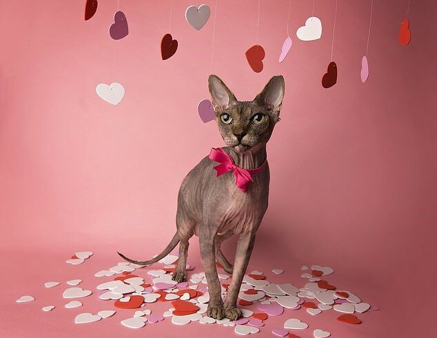 """""""Echte Modelle"""": Katzen posierten glücklich für Kalenderfotos, Details"""