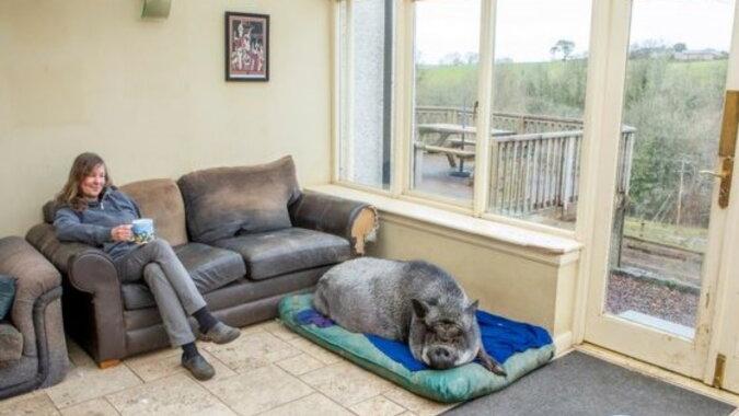 Das Schwein. Quelle: wi-fi.com